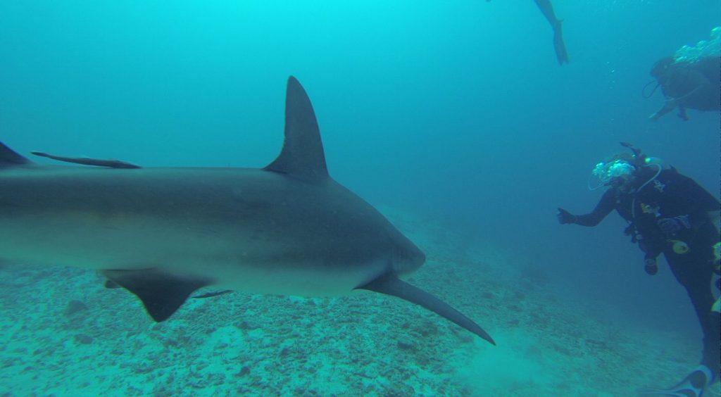 scuba dive in an aquarium, Scuba Diving in Aquariums // 24 Reasons to Dive an Aquarium
