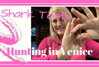 , What We Found Shore Diving for Shark Teeth in Venice, Florida // Collecting Fossils Legally