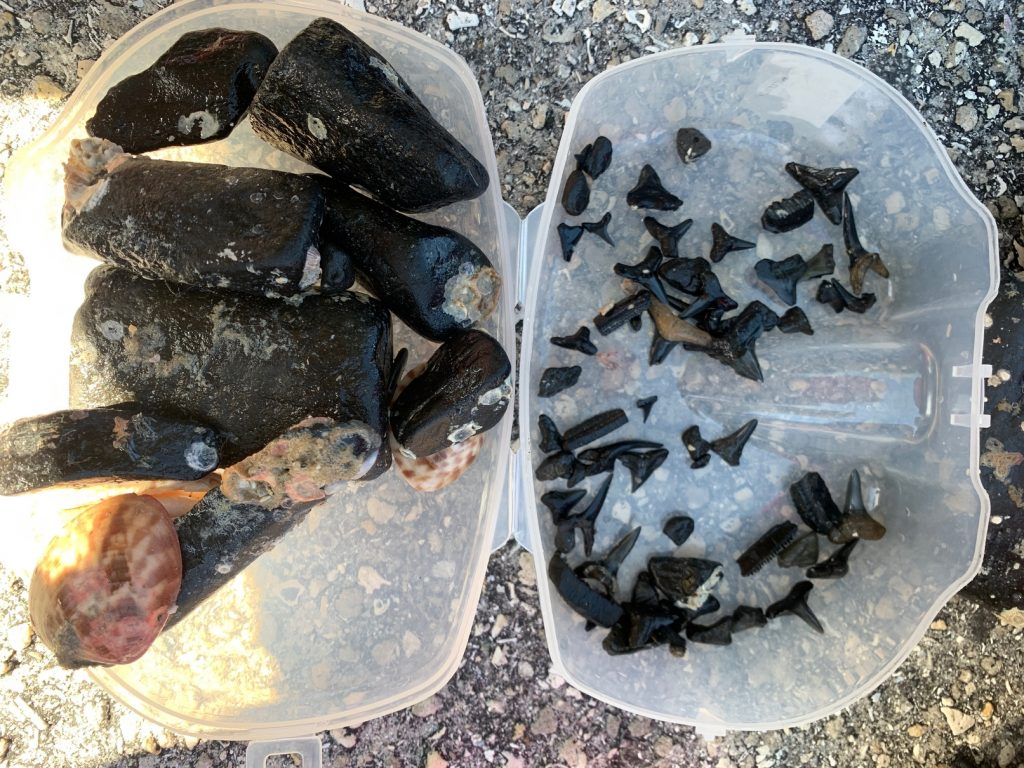 Florida shark teeth shore diving, What We Learned About Shore Diving for Shark Teeth in Venice Florida