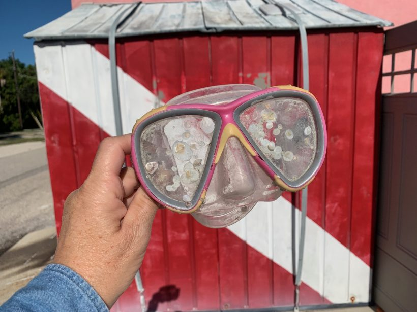 , How to Carry Your Scuba Dive Mask When Traveling // Should You Keep Your Dive Mask in the Original Box
