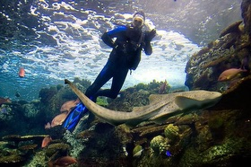 , 17 Aquariums for Scuba Diving in the US // The Most Comprehensive List of Aquarium Dives