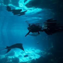 , 17 Aquariums for Scuba Diving in the US // The Most Comprehensive List of Aquarium Dives