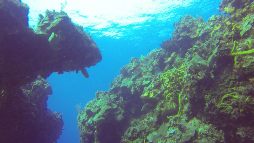Scuba Diving in Cozumel, Diving Cozumel Mexico // Dive Cruise // Blue XtSea Diving