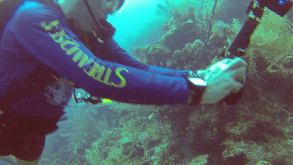 , Diving Belize City Belize // Dive Cruise // Sea Sports Belize