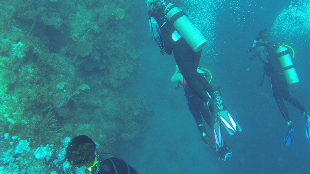 , Diving Roatan Honduras // Dive Cruise // Wikkid Divers – Ecologic Adventures