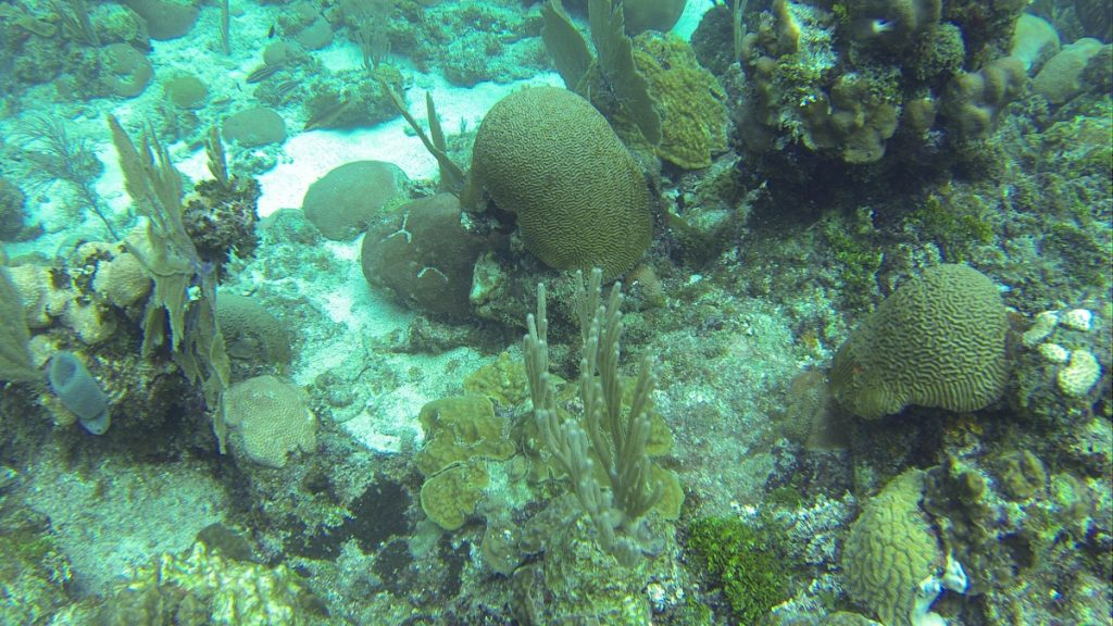 , Diving Roatan Honduras // Dive Cruise // Wikkid Divers – Ecologic Adventures