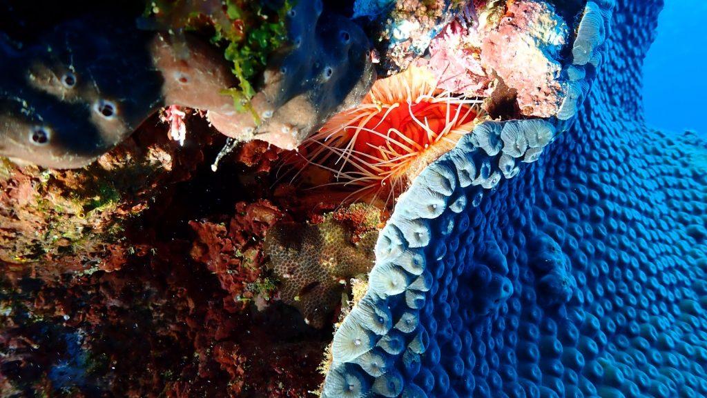 , SCUBA Diving in Cuba // Spectacular Shore Diving