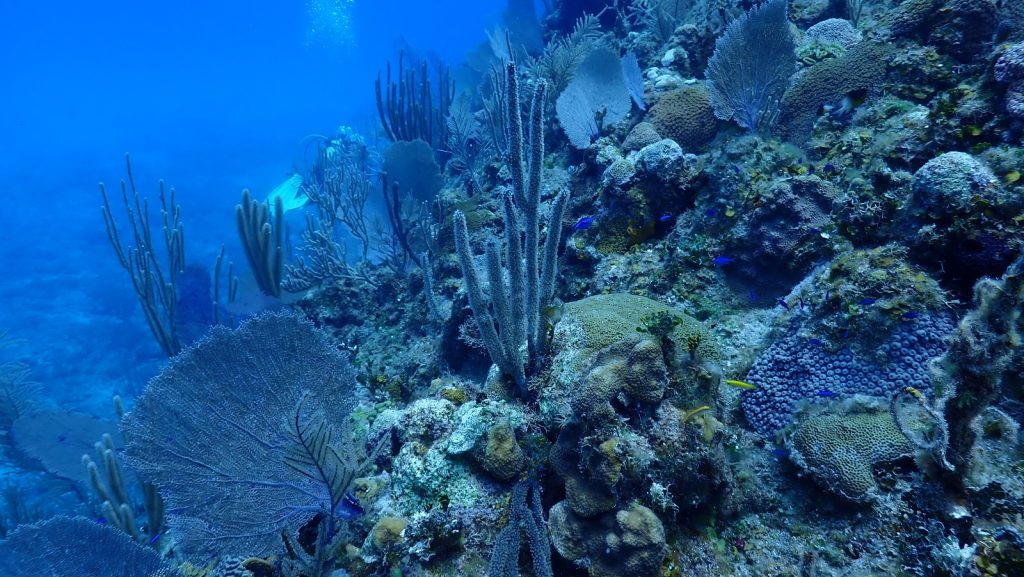 , Dive Trip From Havana // Diving the Reefs of Cuba's North Shore