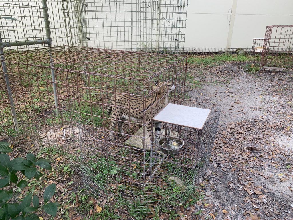 Big Cat Rescue, Big Cat Rescue // Tampa Florida // Exotic Animal Sanctuary