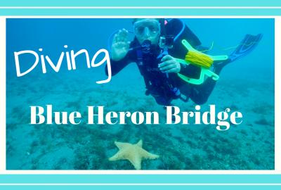 DIVING BLUE HERON BRIDGE // RIVIERA BEACH FLORIDA, DIVING BLUE HERON BRIDGE // RIVIERA BEACH FLORIDA // Deep Water Happy