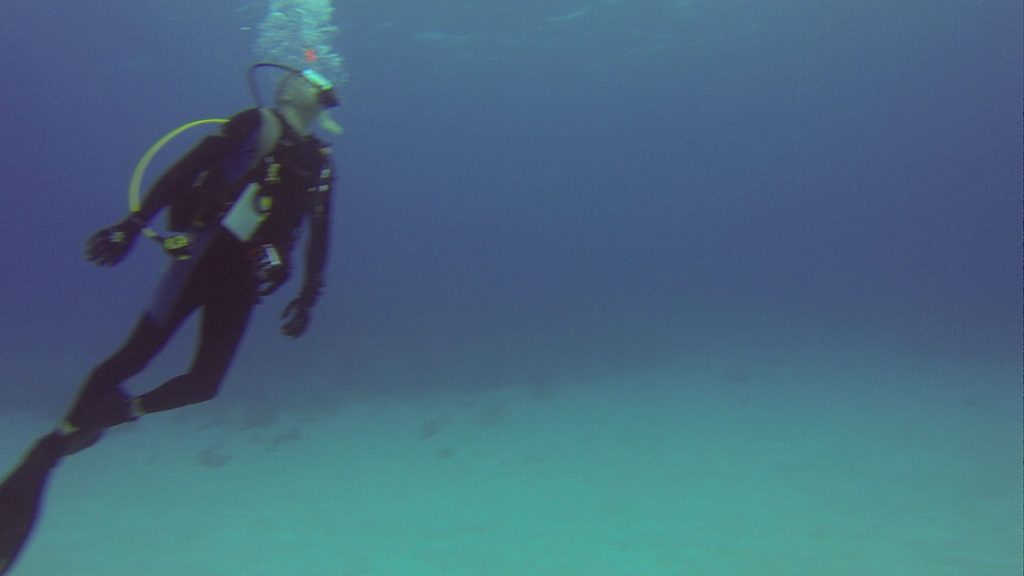 Scuba Diving With Stuart Cove's, Scuba Diving With Stuart Cove's // Second Time Around // Lessons Learned // Dive Operator Review