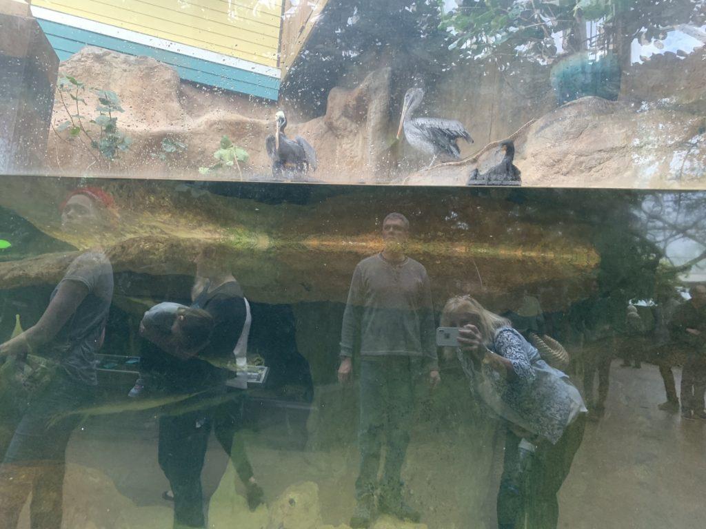 Florida Aquarium Tampa, Florida Aquarium // Things to Do in Tampa, Florida