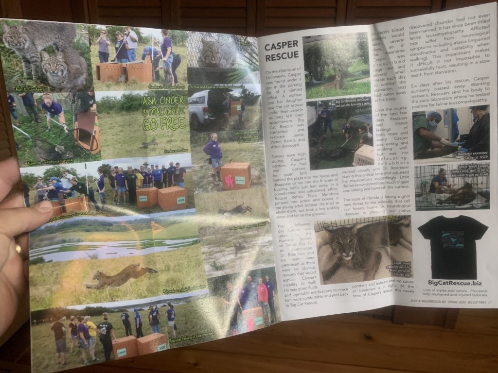 Big Cat Rescue, Big Cat Rescue // Tampa Florida // Exotic Animal Sanctuary
