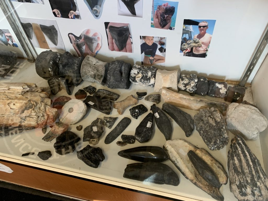 Florida Fossil Permit, Collecting Florida Fossils? // Get a Permit and Stay Legal